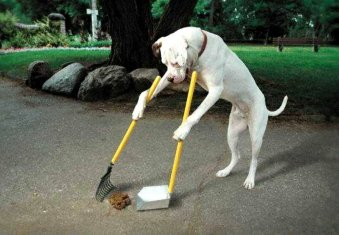 dog-clean-up-poop.jpg