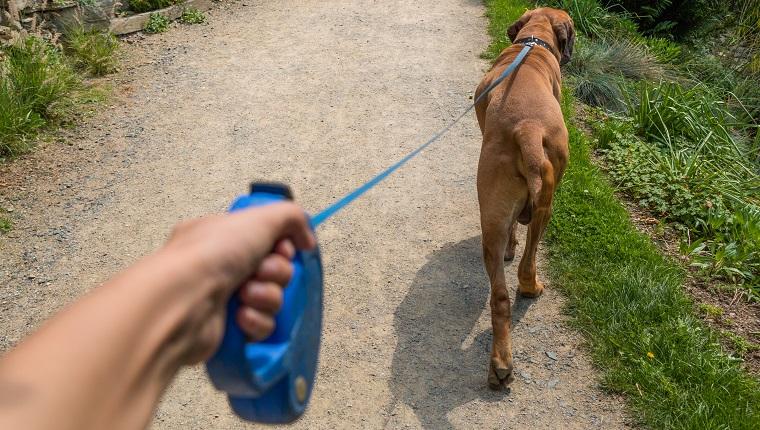 retractable-leashes-dogs-dangerous-1.jpg
